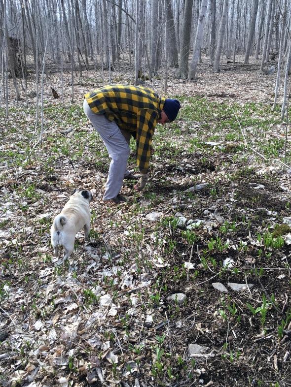 Gearhead picking wild leeks